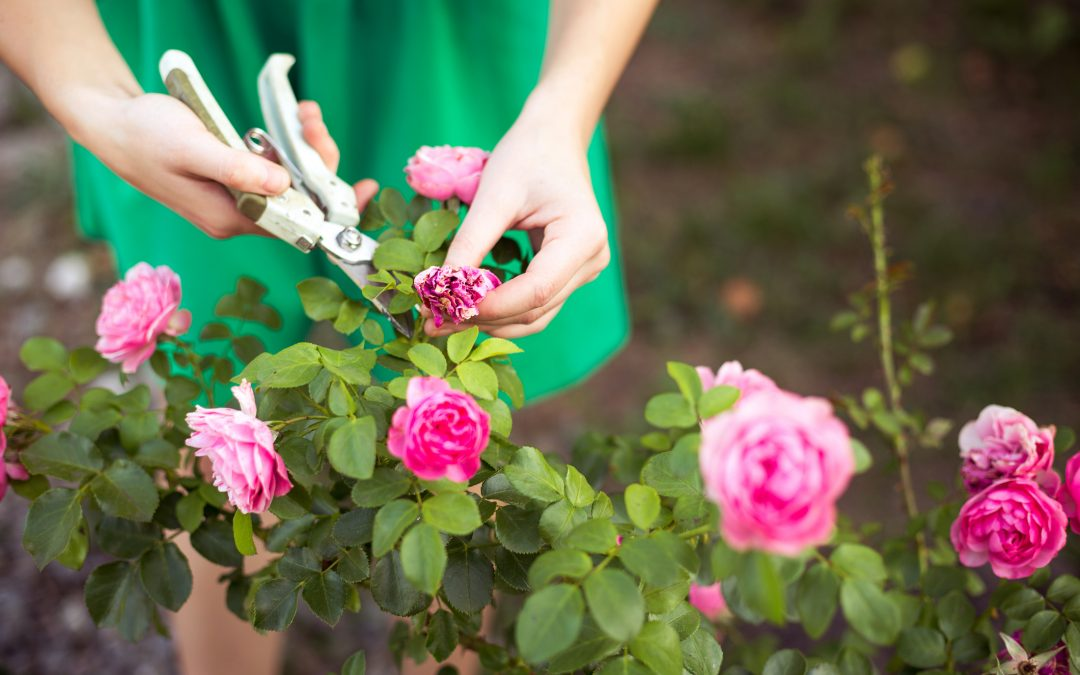 7 Home Maintenance Tips for Summer